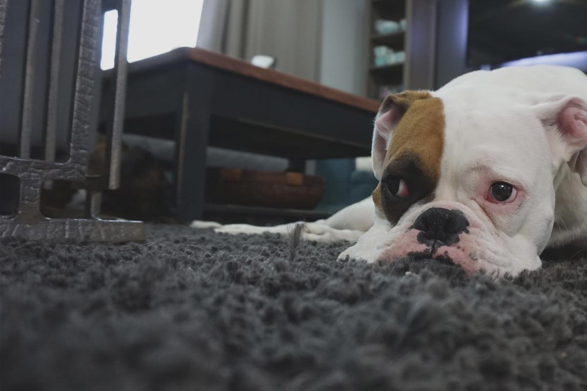 alfombra-confortable-diseno-de-interiores-dihweb